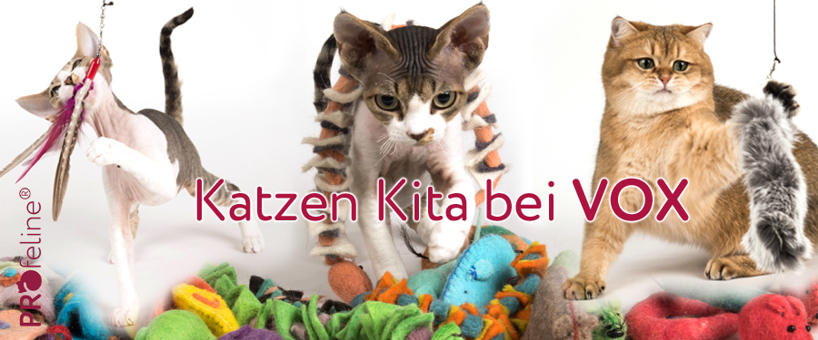 """Tom kommentiert Sendereihe """"Die Katzen-Kita"""" auf Vox"""